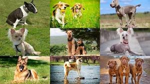 Les différentes races de Chien - verschiedene Hunderassen