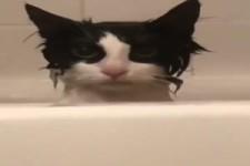 Böser Blick einer Katze