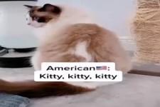 Welche Nationalität hat diese Katze