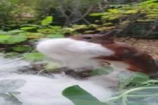 Eichhörnchen oder Hamster?