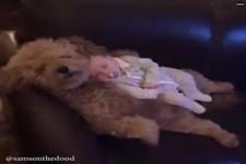 Deshalb sollte jedes Kind mit einem Tier aufwachsen