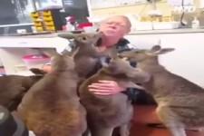 erstaunlich, wie Tiere Gefühle zeigen können