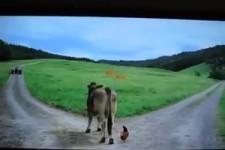 """Das """"MIGNON""""-HUHN bringt noch gleich die Kuh mit"""