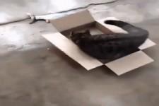 Raus aus dem Karton