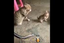 Katzen sind einfach nur süß