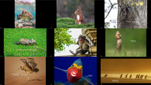 The Finalists of the 2020 Comedy Wildlife Photography Awards