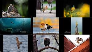 The 2020 Audubon Photography Awards Winners & Top 50 -