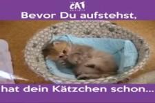 Bevor du aufstehst , hat dein Kätzchen schon.....