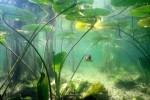 Unterwasserwelt.pps auf www.funpot.net