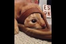 Lustige Sandalen-Katze