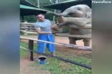 Elefanten sind wundervolle Tiere