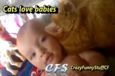 Katzen lieben Babys