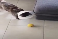 Arme Katze mit Trichter