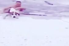 Hunde-Rettung