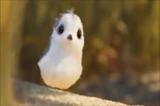 """""""Pieper"""", kleiner süßer Vogel der den großen was beibringt"""