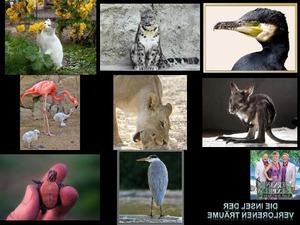 Bilder-Galerie vom 12022019 Tiere 2