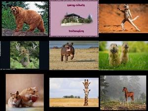 Bilder-Galerie vom 31012019 6 Tiere