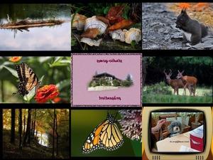 Bilder-Galerie vom 31012019 7