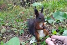 Eichhörnchen ist erstarrt