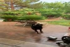 Hund fängt Regen