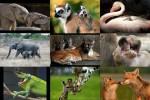 Tiere---Mutter-und-Kind.pps auf www.funpot.net