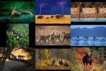 Tiere-in-der-Wildnis.pps auf www.funpot.net