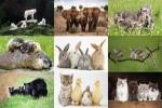 Four-animals.ppsx auf www.funpot.net