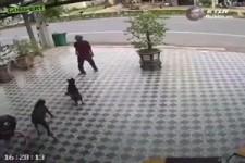 Hunde fernhalten