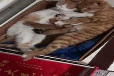 Süße Katzenfamilie