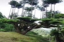 Bäume, auf denen Bäume wachsen