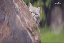 Böses Kätzchen