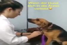 Hund liebt Aerztin