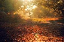 Automne 71 - Herbst 71