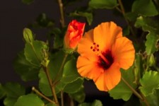 Fleurs 47 - Blumen 47