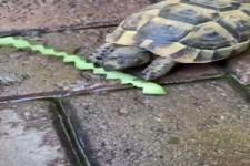 Schildkröte beißt sauber ab