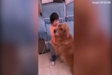 Hund beschützt sein kleines Kind