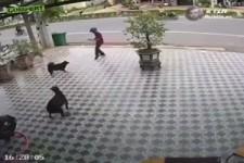 Vor Hunden schuetzen