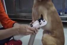 Prothesen für den Hund