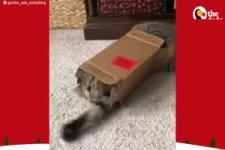 Karton's , des Katzen liebster Spiel-, u. Schlafplatz