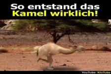 So sind Kamele entstanden