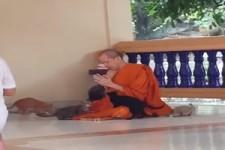 Der Mönch und die Kätzchen