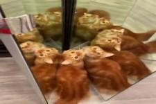 Die Katzen sind fasziniert vom tollen Spiegel