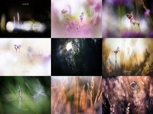 Bob Daalder - Flore - Flora .... nicht blättern