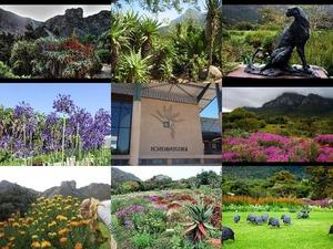 Kirstenbosch National Botanical Garden -