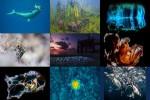 2017-underwater-photographer.ppsx auf www.funpot.net