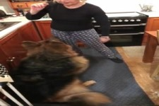 Hund reißt Schranktüre ab