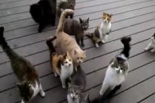 Katzen-Konzert