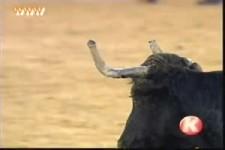 Der Stier hat gewonnen
