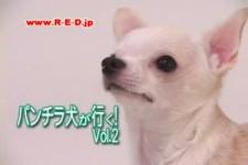 doggy cam