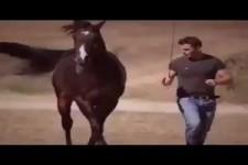 Free Style Pferde-Show